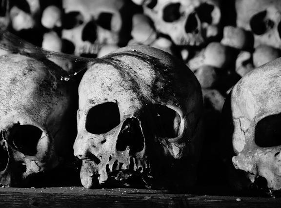 skulls in museum