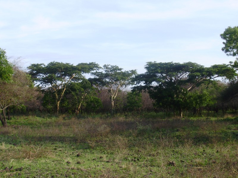Trees in Baluran National Park