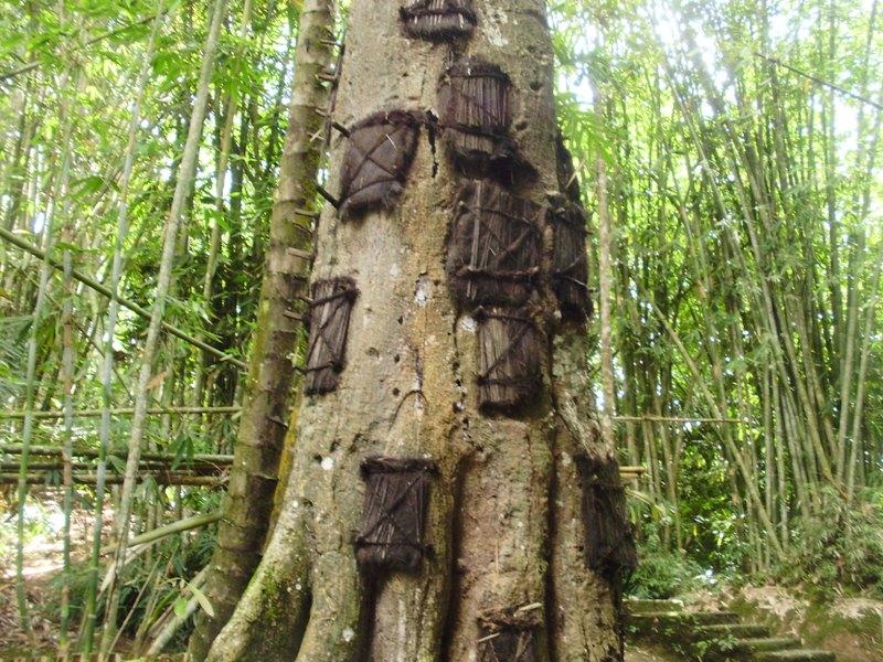 Kambira baby grave tree