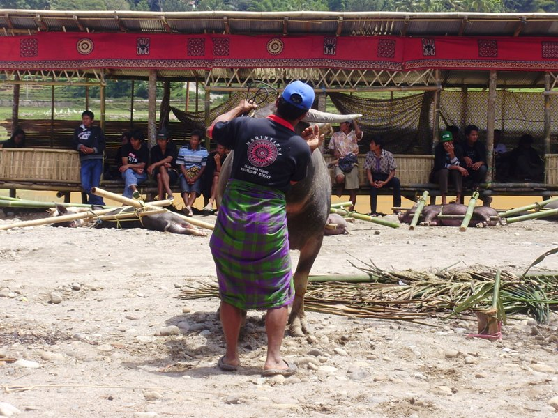 funeral ceremony in Tana Toraja