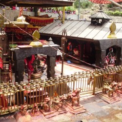 Daksinkali temple in Nepal and mass animal sacrifices