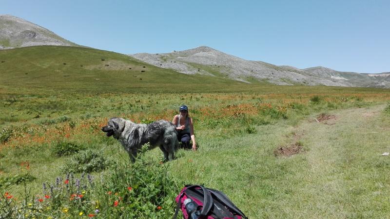 Hiking in Mavrovo national park
