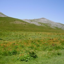 Hiking in Mavrovo national park through beautiful meadows