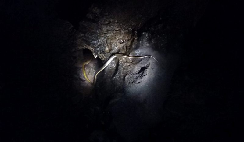 Fossil cave