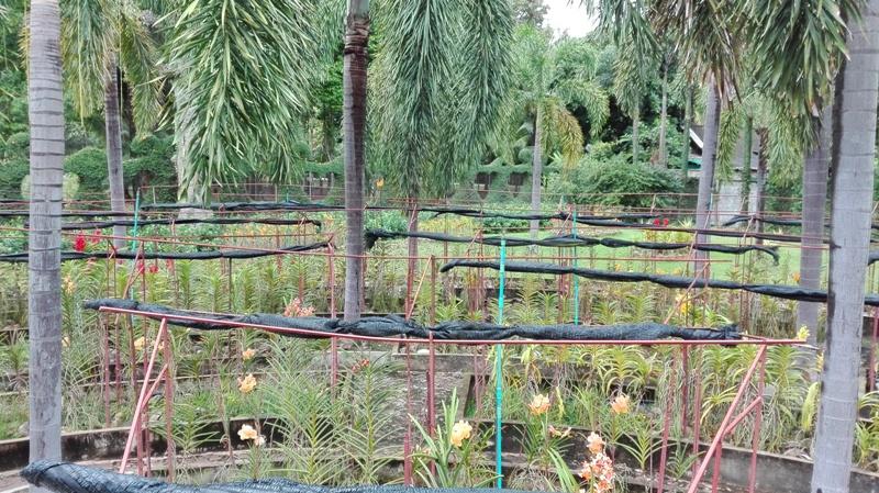 Botanical Garden in Chiang Mai