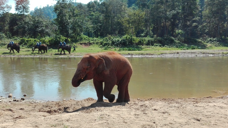 Elephant Park in North Thailand
