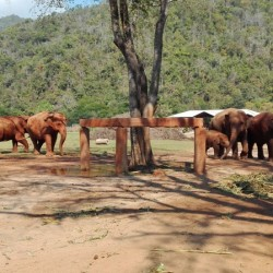 Elephant Nature Park in Chiang Mai – Day in the Best Sanctuary in Thailand